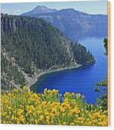 D2m5622-rabbit Brush At Crater Lake Wood Print