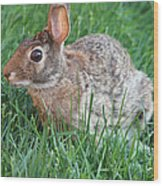 Rabbit On The Run Wood Print