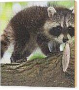 Raccoon Baby Wood Print