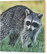 Raccoon Buddy Wood Print