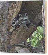 Raccoon Family Time Wood Print