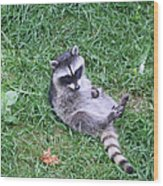 Raccoon Plays In The Grass Wood Print