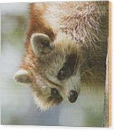 Raccoon Portrait Wood Print