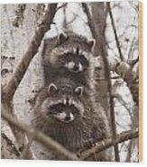 Raccoon Siblings Wood Print