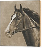 Racehorse Painting In Sepia Wood Print