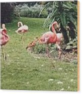 Racing Flamingos Wood Print