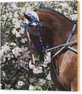 Racing Horse  Wood Print