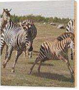 Racing Zebras 1 In Color Wood Print