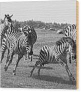 Racing Zebras 1 Wood Print
