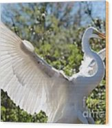 Radiant Great Egret Wood Print