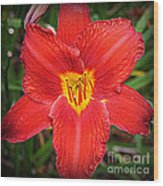 Radiant In Red - Daylily Wood Print