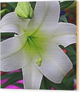 Radiant In White - Lily Wood Print