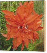 Radiant Lily Wood Print by Gregory Young