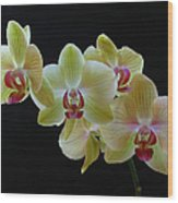 Radiant Orchid Wood Print