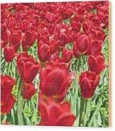 Radiant Red Wood Print