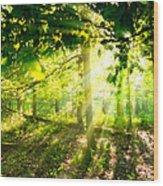 Radiant Sunlight Through The Trees Wood Print