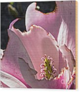 Ragged Magnolia Wood Print
