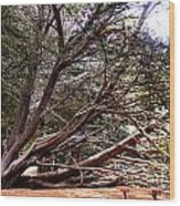 Ragged Point Tree Wood Print