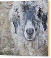 Raggedy Goat Wood Print