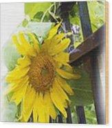 Railed Sunflower Wood Print
