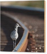 Railroaded Willet  Wood Print