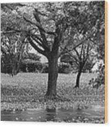 Rain And Leaf Ave In Black And White Wood Print