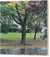 Rain And Leaf Ave Wood Print