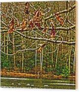 Rain At The Pumpie Wood Print
