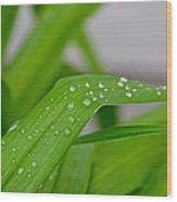 Rain Beads IIi Wood Print
