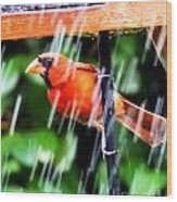 Rain Bird Wood Print