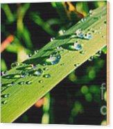 Rain Blade Wood Print