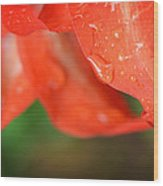 Rain Dance - Red Flower Photography By Sharon Cummings Wood Print