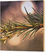 Rain Droplets On Pine Needles Wood Print by Loriental Photography