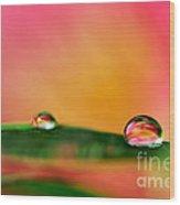 Rain Drops Wood Print