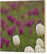 Rain Drops Keep Falling On My Tulips Wood Print