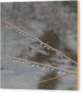 Rain Drops On A Grass Culm Wood Print