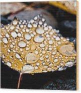 Rain Drops On Autumn Birch Leaf Wood Print