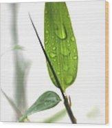 Rain Drops On Bamboo Leaves Wood Print