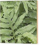 Rain Drops On Ferns Wood Print