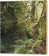 Rain Forest 2 Wood Print
