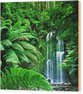 Rain Forest And Waterfall Wood Print