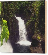 Rain Forest Grotto With 2 Waterfalls Wood Print