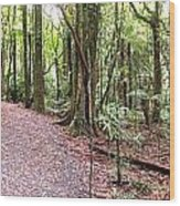 Rain Forest Wood Print by Les Cunliffe
