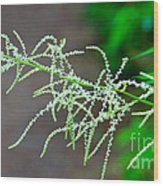 Rain Forest Magic Wood Print by Dana Kern