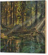 Rain Forest Sunbeams Wood Print