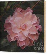 Rain Kissed Camellia Wood Print