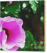 Rain Kissed Flower Wood Print