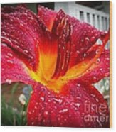 Rain Kissed Lilly Profile 1 Wood Print