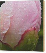 Rain Kissed Wood Print