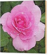 Rain Kissed Rose Wood Print